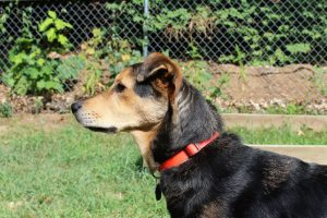 profile of a dog