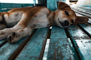 dog lying on a deck