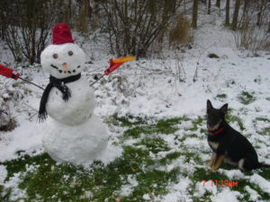 German Shepherd with a snowman